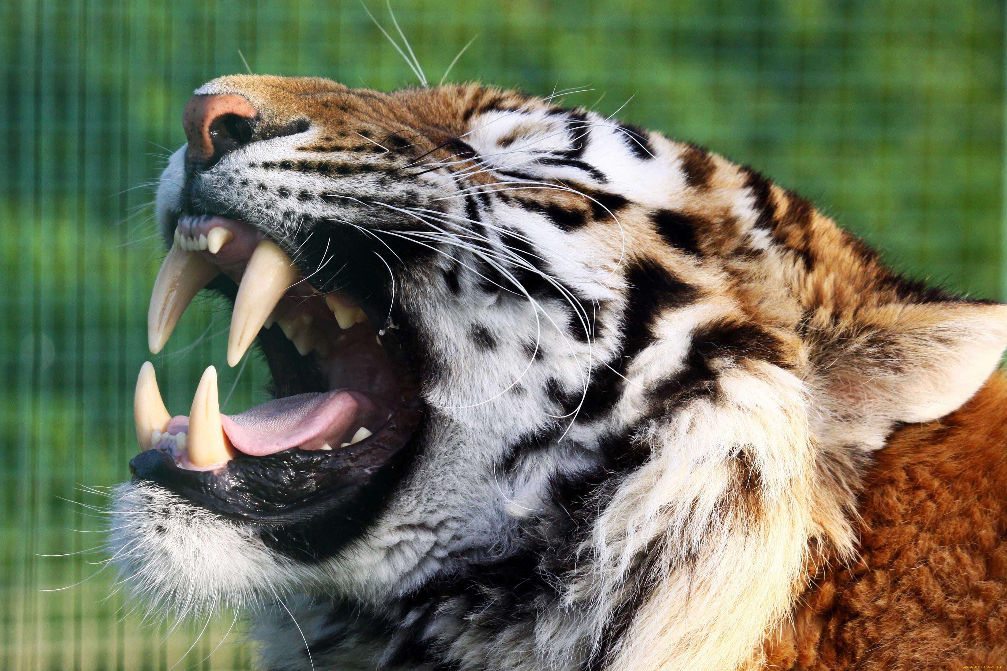 Картинки пасть животных